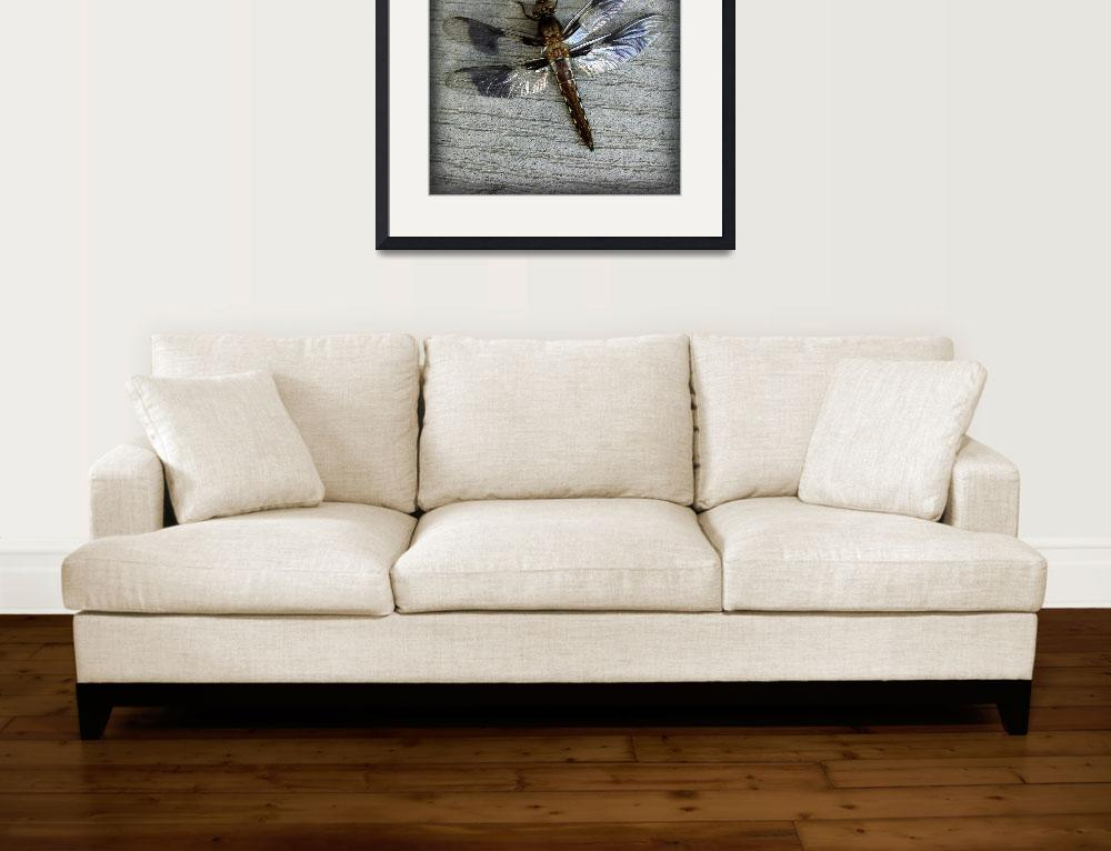 """Female Whitetailed Skimmer Dragonfly Square&quot  (2015) by KsWorldArt"