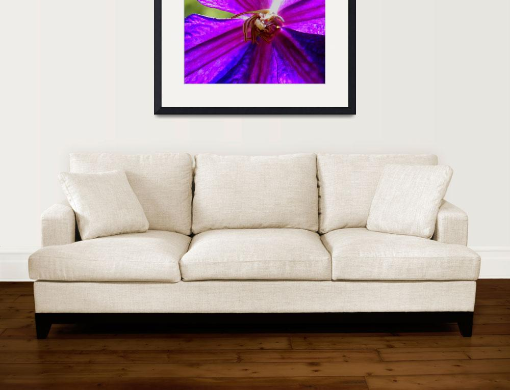 """Bright Clematis&quot  (2009) by Kimmary"