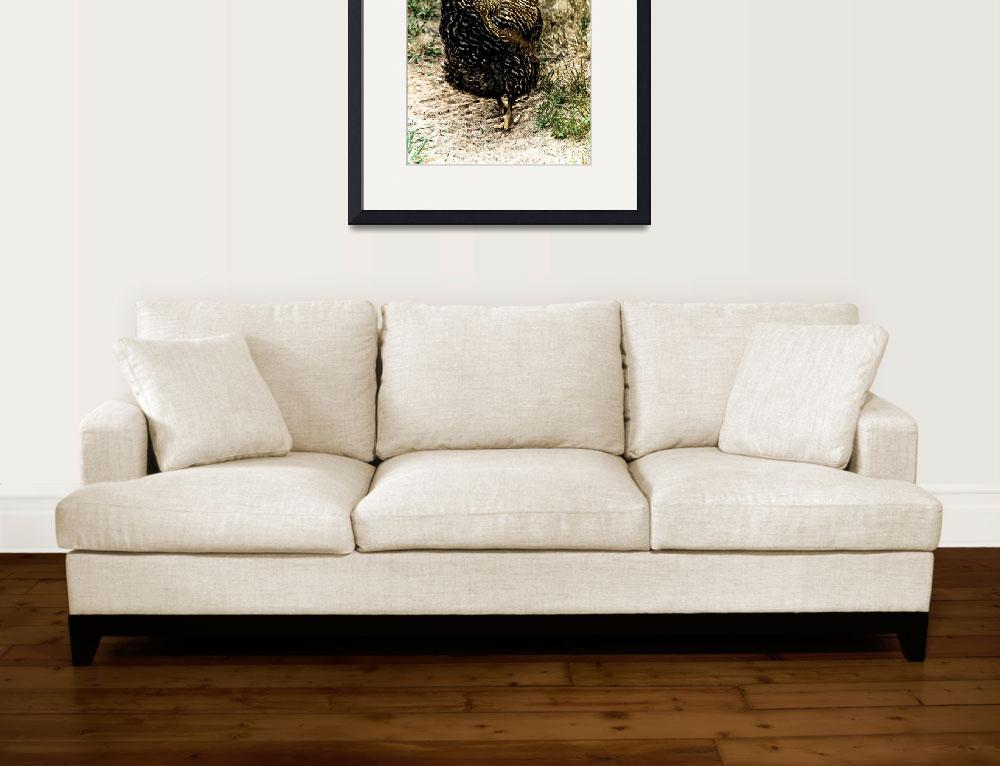 """Barred rock hen portrait&quot  (2007) by eyecontact"