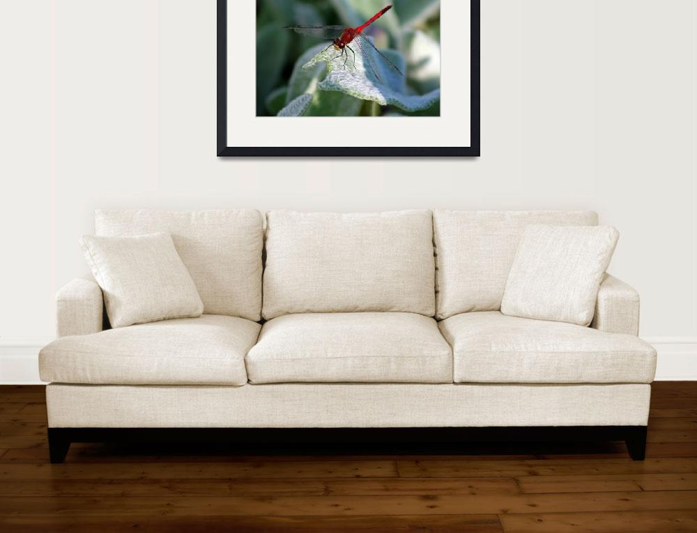 """Red Dragonflyon Lambs Ear Plant&quot  (2012) by KsWorldArt"