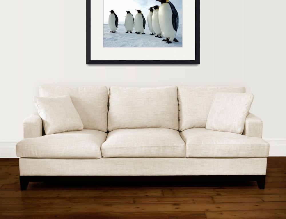 """Penguins Lined Up&quot  (2008) by Alleycatshirts"