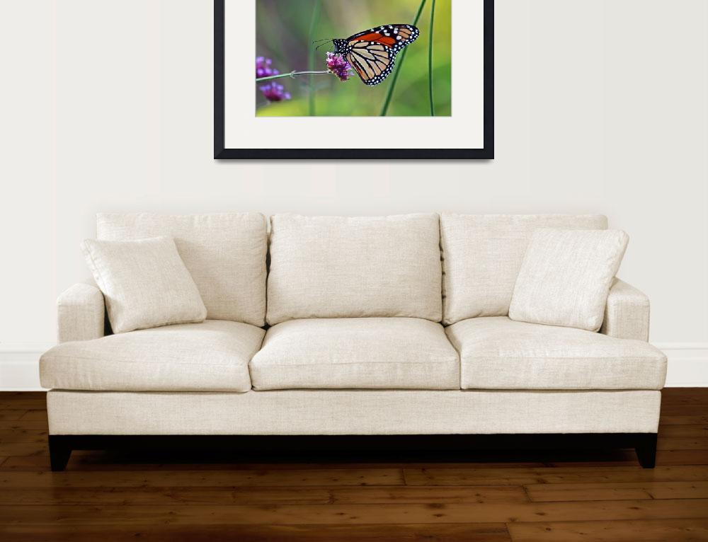 """Butterfly  Monarch&quot  (2012) by KsWorldArt"