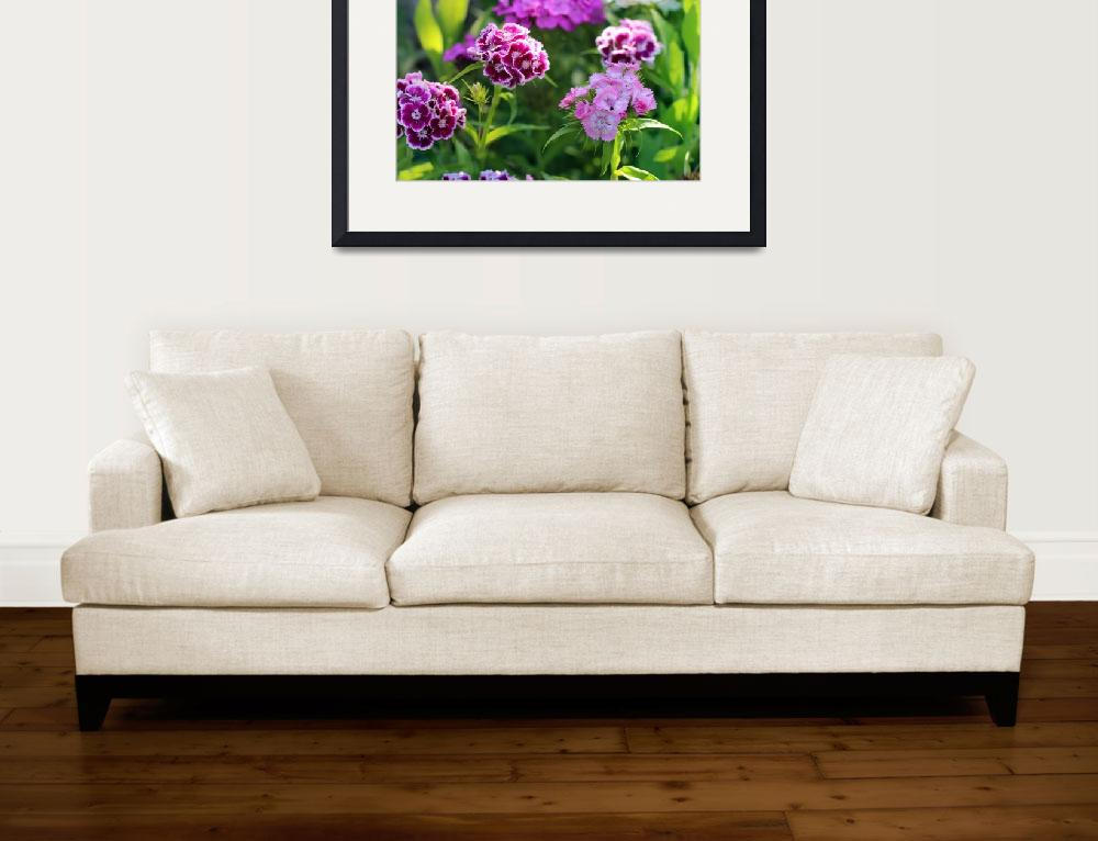 """Sweet William Flowers in Garden 2016&quot  (2016) by KsWorldArt"