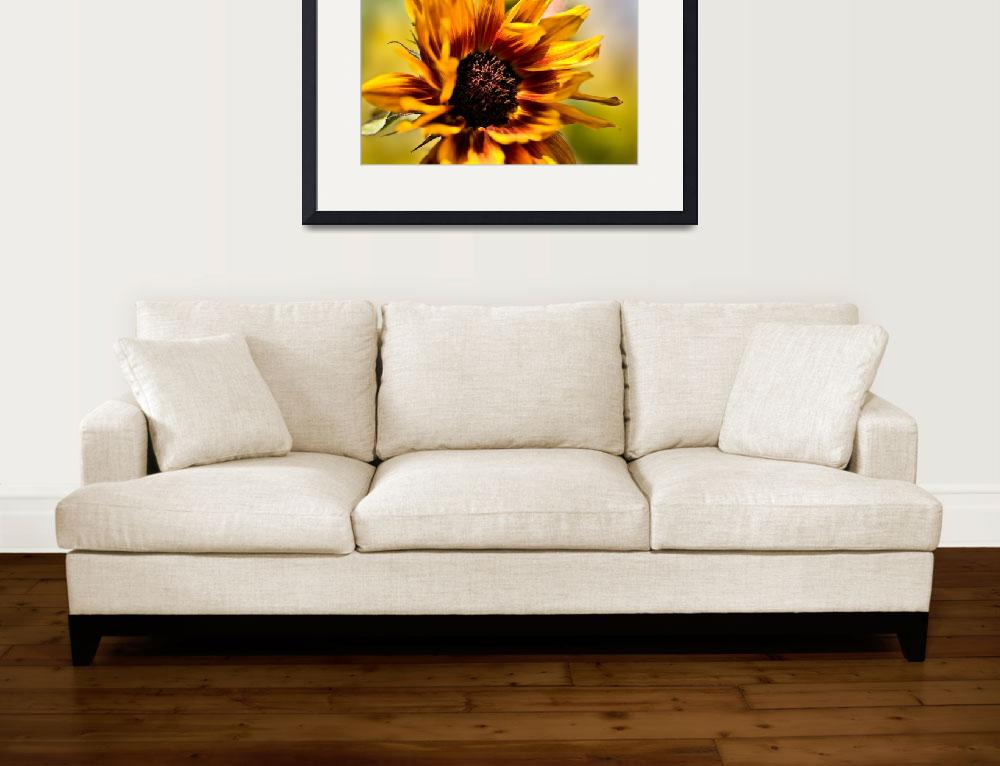 """Sunflower in the Breeze&quot  (2008) by singularscenes"