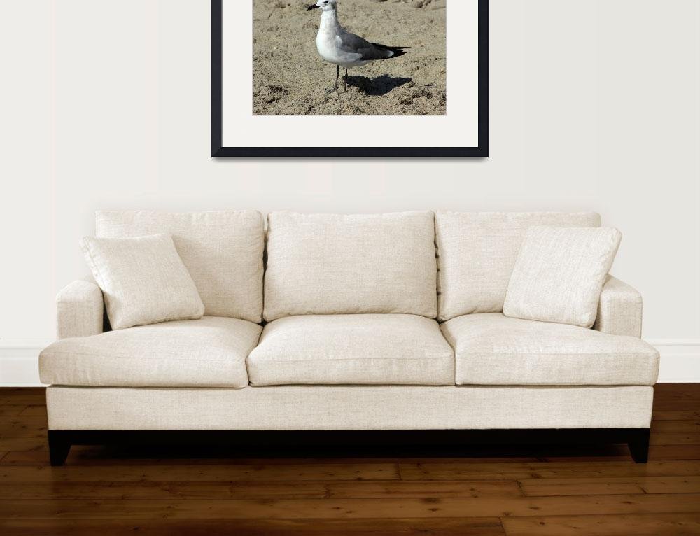 """Gull on Sand&quot  (2014) by rhamm"