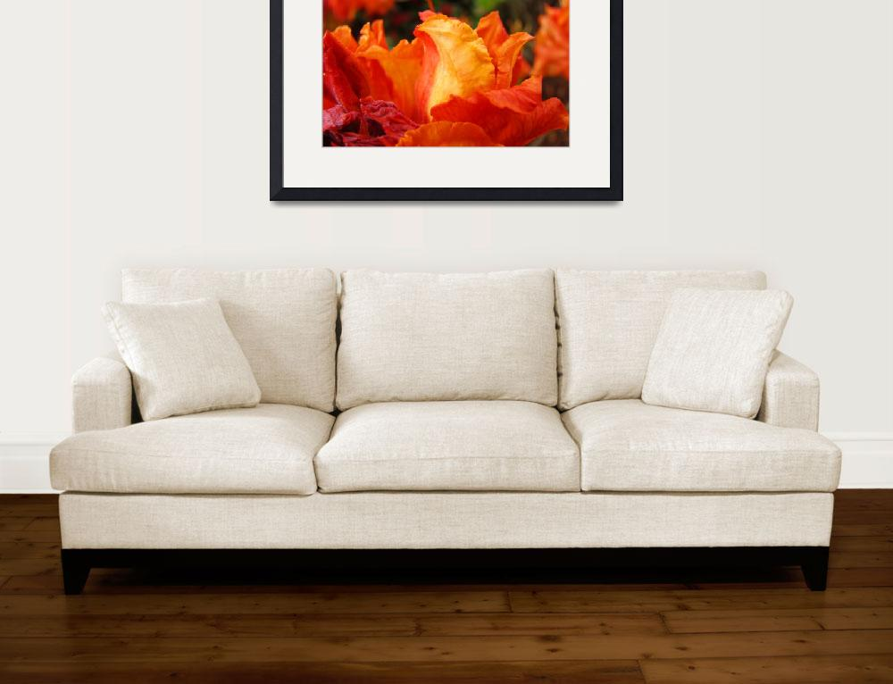 """Rhodies Orange Azalea Flowers Art Rhododendrums&quot  (2009) by BasleeTroutman"