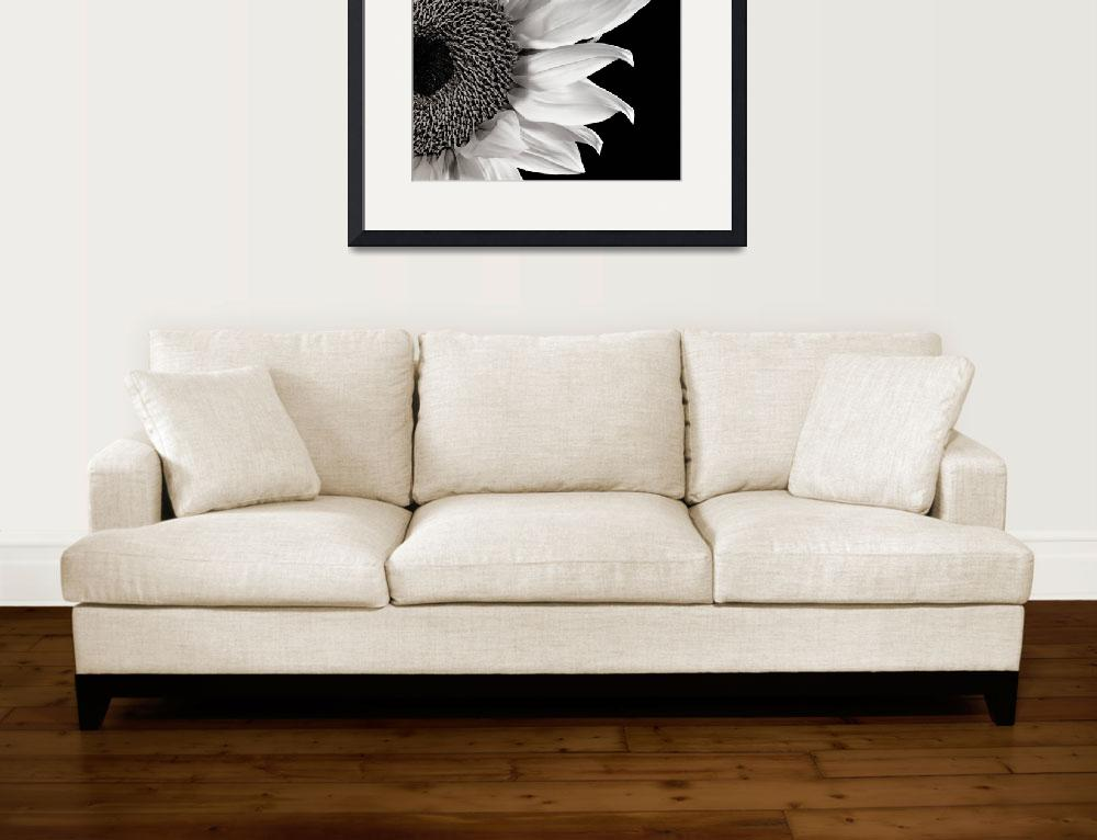 """Sunflower Study in Black and White&quot  (2011) by dawnleblanc"