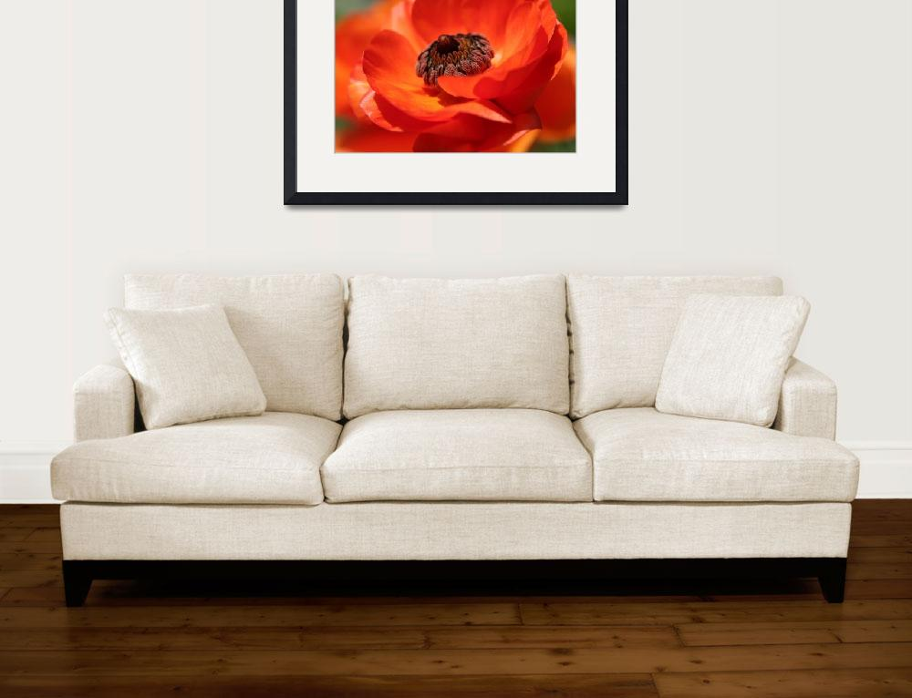 """Poppy Love&quot  (2008) by JGphotography"