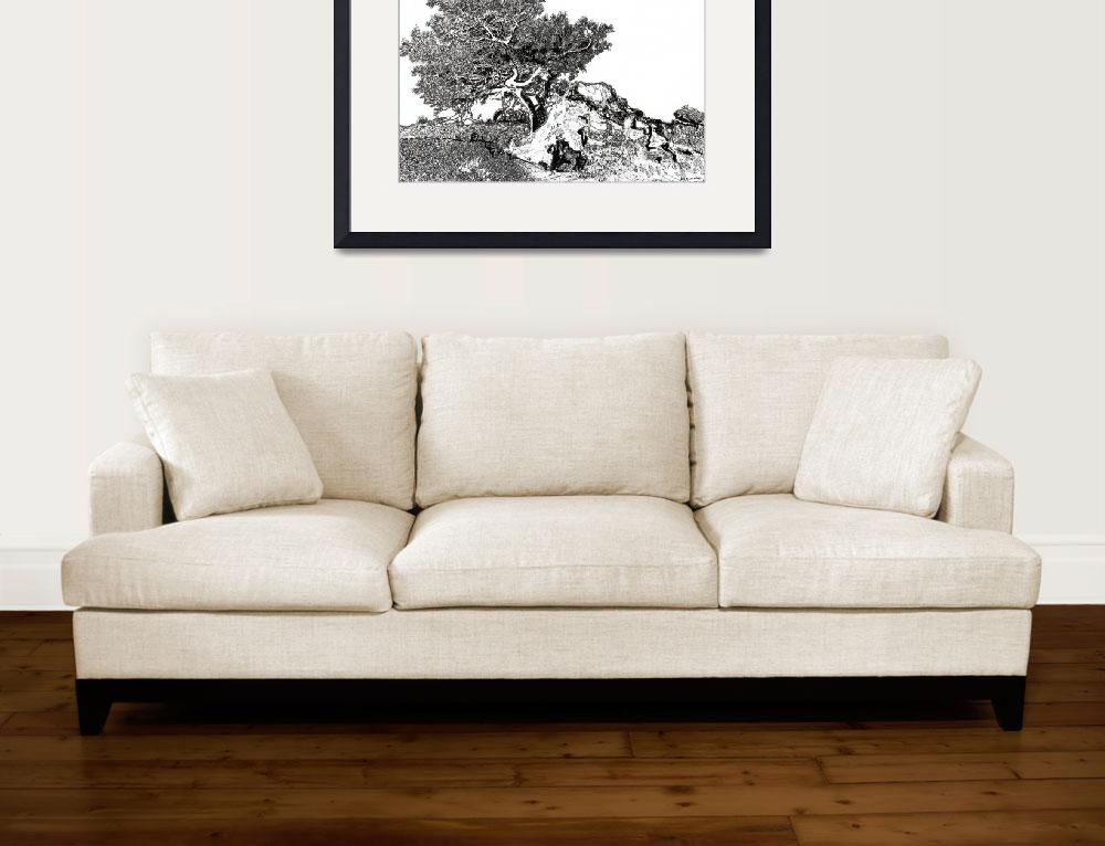 """Torrey pine tree by RD Riccoboni drawing&quot  (2008) by RDRiccoboni"