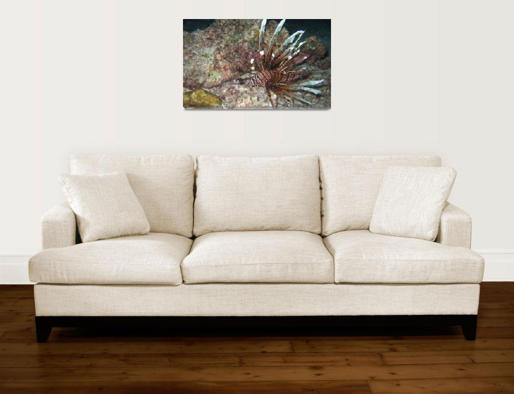 """Lionfish&quot  (2006) by Mac"