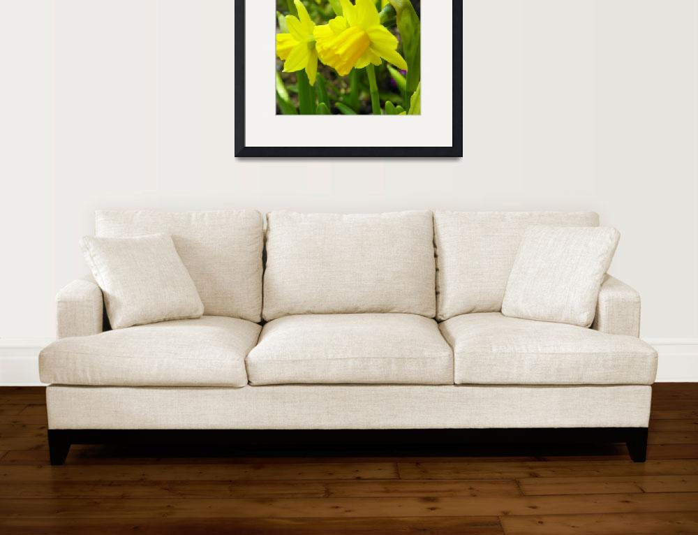 """Yellow Daffodil Flowers&quot  (2013) by vpicks"