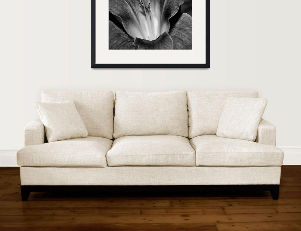 """Gladiola In Black And White&quot  (2015) by bettynorthcutt"