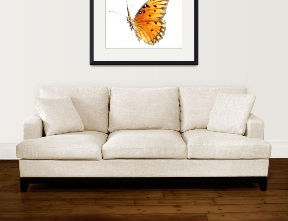 """Butterfly in Flight Before a White Background&quot  (2010) by marshacarson"