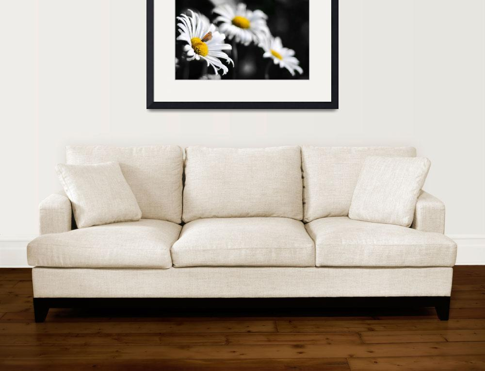 """Butterfly over daisies&quot  (2012) by FrancescoMalpensi"