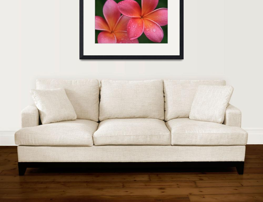 """Aloha Hawaii Kalama O Nei Pink Tropical Plumeria&quot  (2012) by sharonmau"