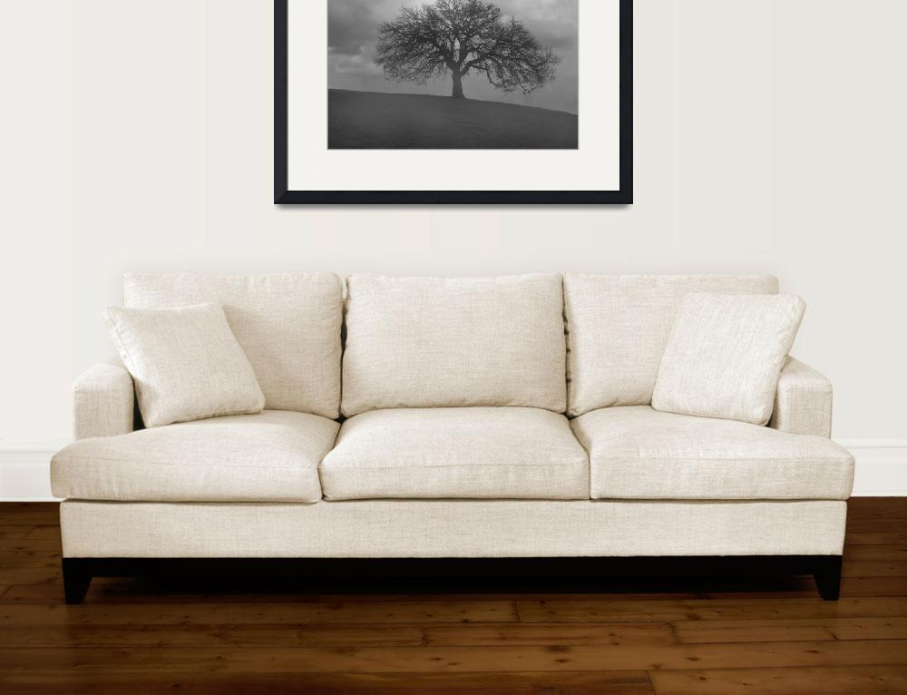 """Oak Tree in Morning Fog- Black and White&quot  (2008) by PaulHuchton"