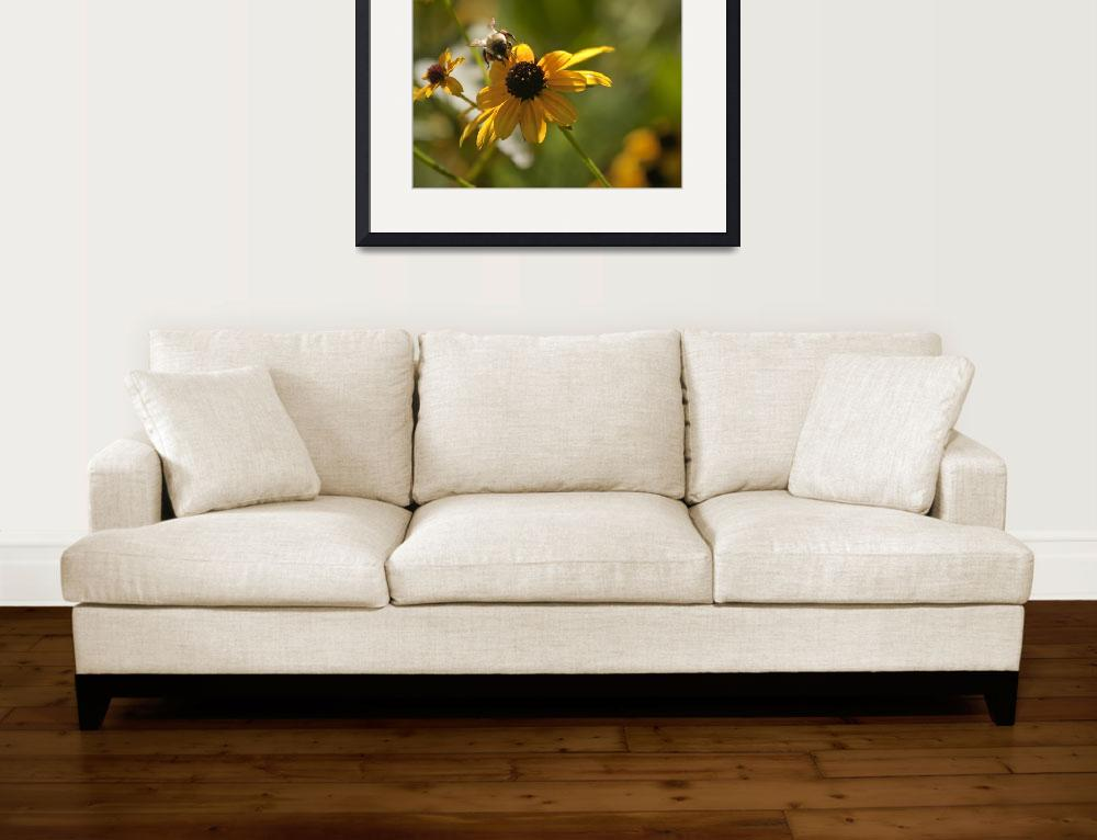 """Black-eyed Susan With Bee&quot  (2008) by poetryoflight"
