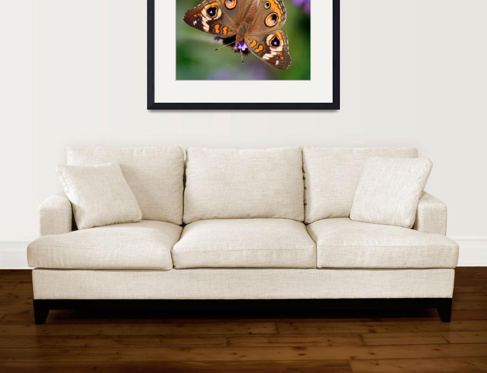 """Common Buckeye Butterfly Beauty 2014&quot  (2014) by KsWorldArt"