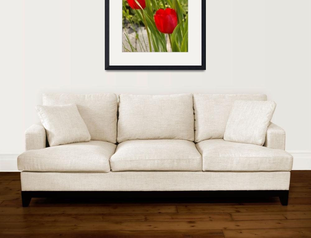 """Tulip Duo&quot  (2008) by LHPhotography"