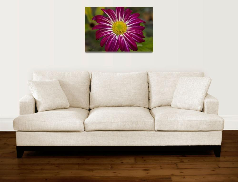 """Purple Aster Flower Power&quot  (2011) by lightningman"