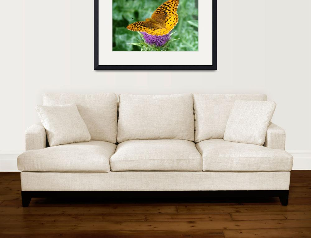 """Fritillary Butterfly  on Milk Thistle&quot  (2010) by teenolan"