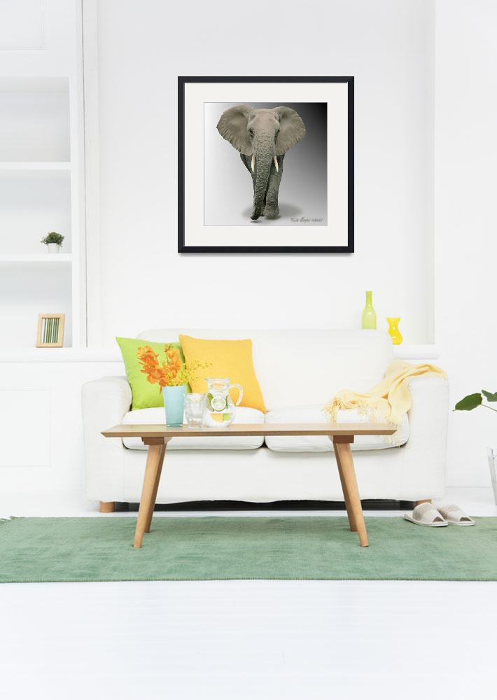 """African Elephant walking&quot  (2009) by Major-Confusion"