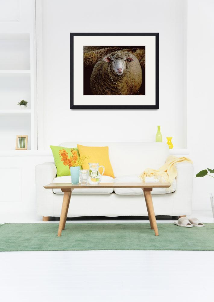"""Woolly Sheep&quot  (2007) by bavosiphotoart"