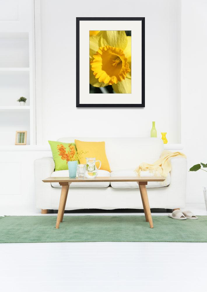 """Daffodil Yellow&quot  (2012) by bettynorthcutt"