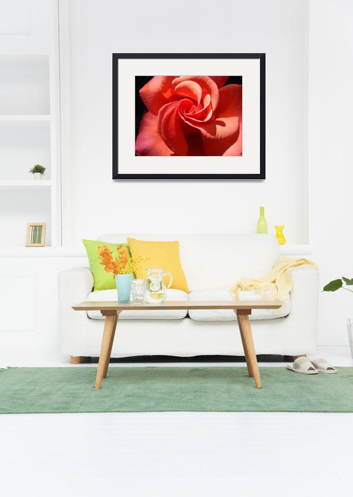 """OFFICE ART ROSES Orange Rose Flowers Baslee&quot  (2009) by BasleeTroutman"