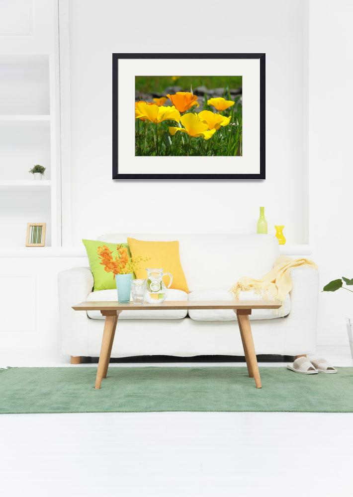 """Office Art POPPIES Blooming 14 Poppy Flower Art&quot  (2009) by BasleeTroutman"