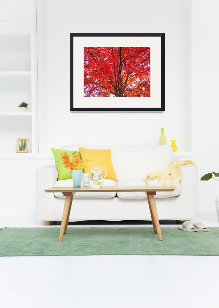 """Autumn Trees art prints Fall Trees Leaves&quot  (2010) by BasleeTroutman"