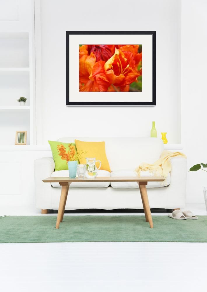 """Orange Rhodie Flower art print Rhododendron Macro&quot  (2010) by BasleeTroutman"