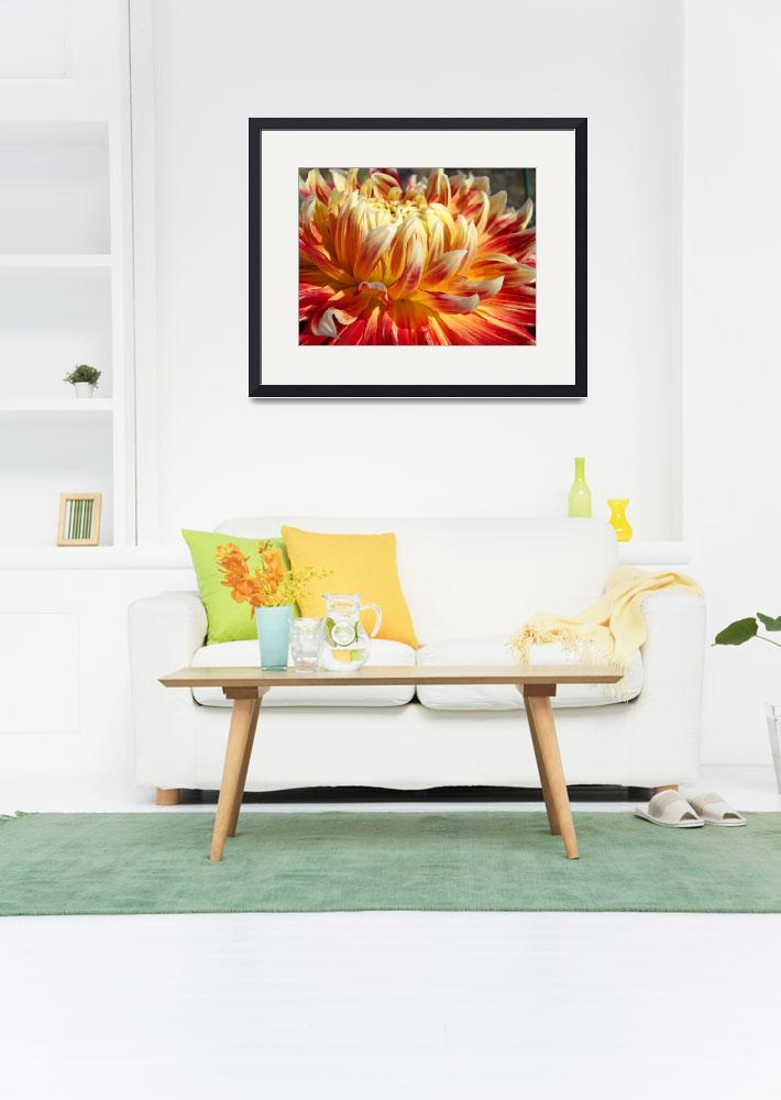 """Dahlia Floral Orange Dahlias Flowers art prints&quot  (2013) by BasleeTroutman"
