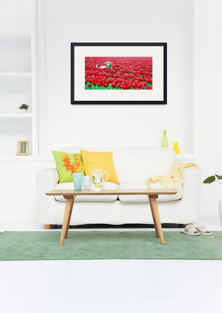 """dogintulips_copyrightphoto_ChristopherBoswell&quot  by christopherboswell"