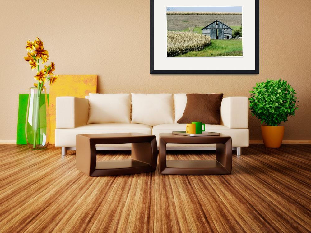 """Midwestern Barn and Cornfield&quot  by photoworks"