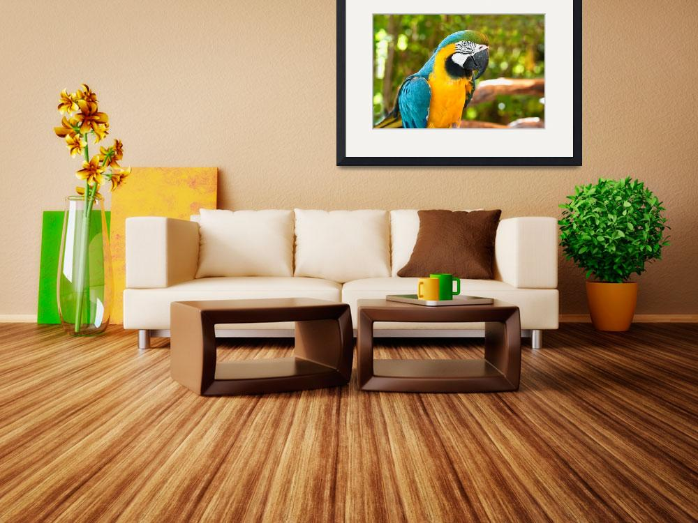 """Blue and Gold Macaw&quot  (2010) by mjphoto-graphics"
