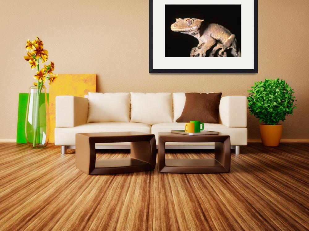 """Crested gecko&quot  (2008) by reptiles4all"