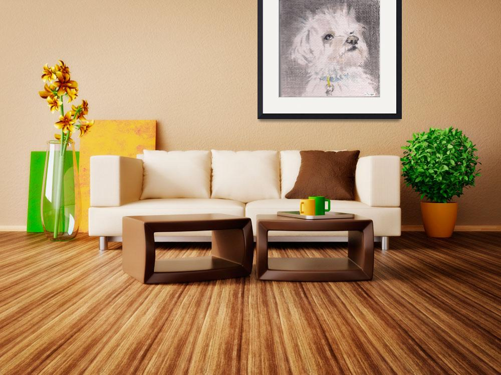 """MAX THE MALTESE&quot  by JayneSomogy"