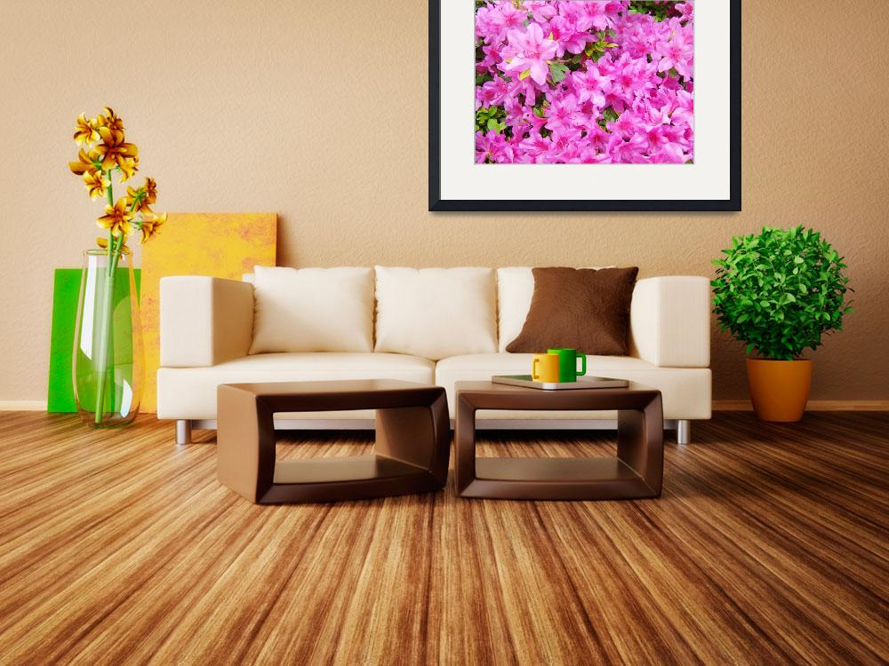 """Azaleas Landscaped Art Prints Pink Azalea Flowers&quot  (2009) by BasleeTroutman"