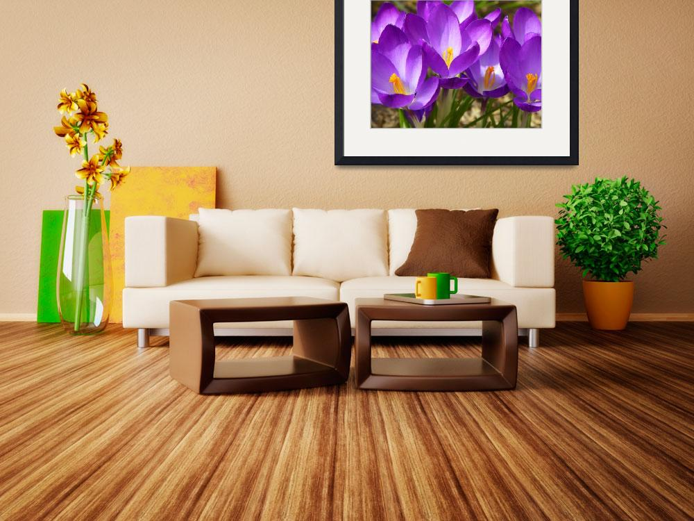 """Spring Crocus Flowers&quot  (2013) by vpicks"