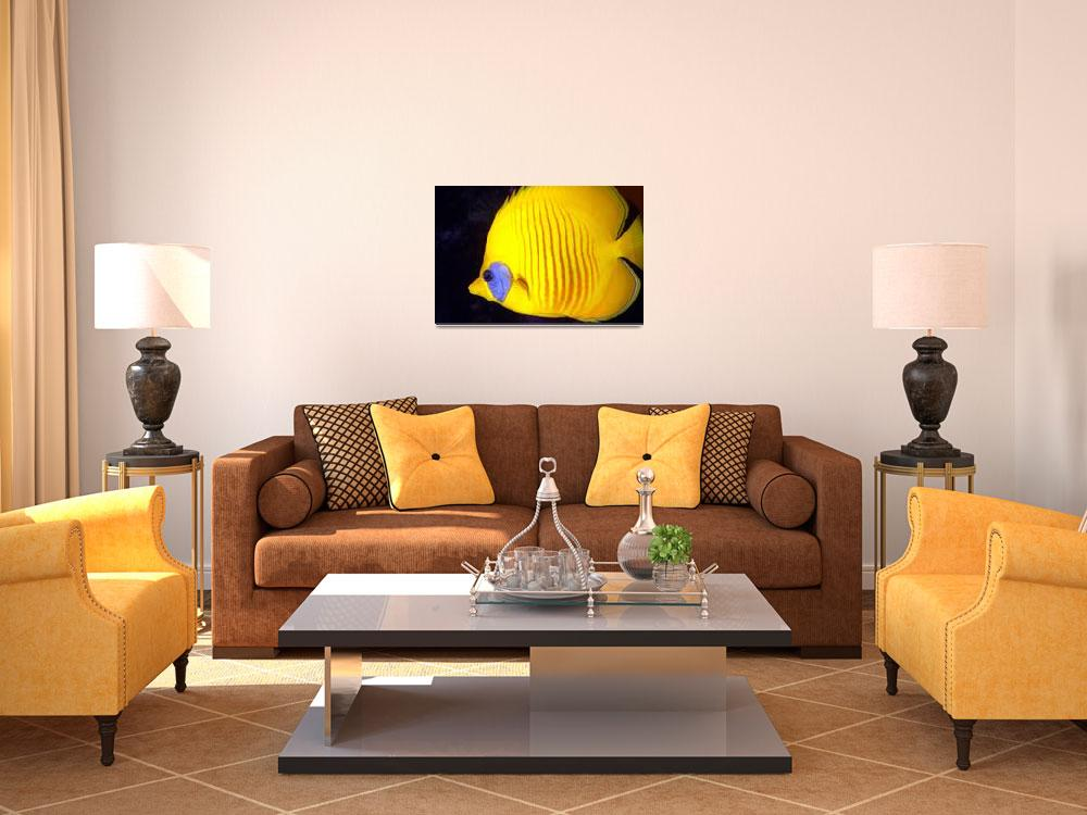 """Yellow Diskfish Close&quot  (2004) by JoaoPonces"