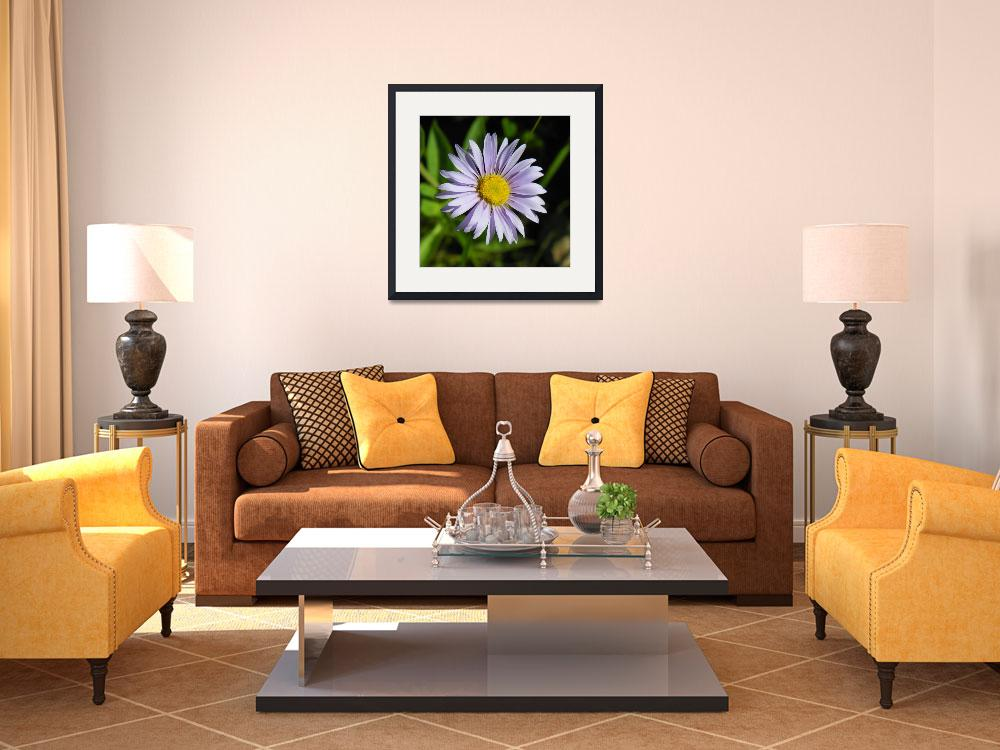 """Botanical - Alpine Aster - Outdoors Floral&quot  by artsandi"
