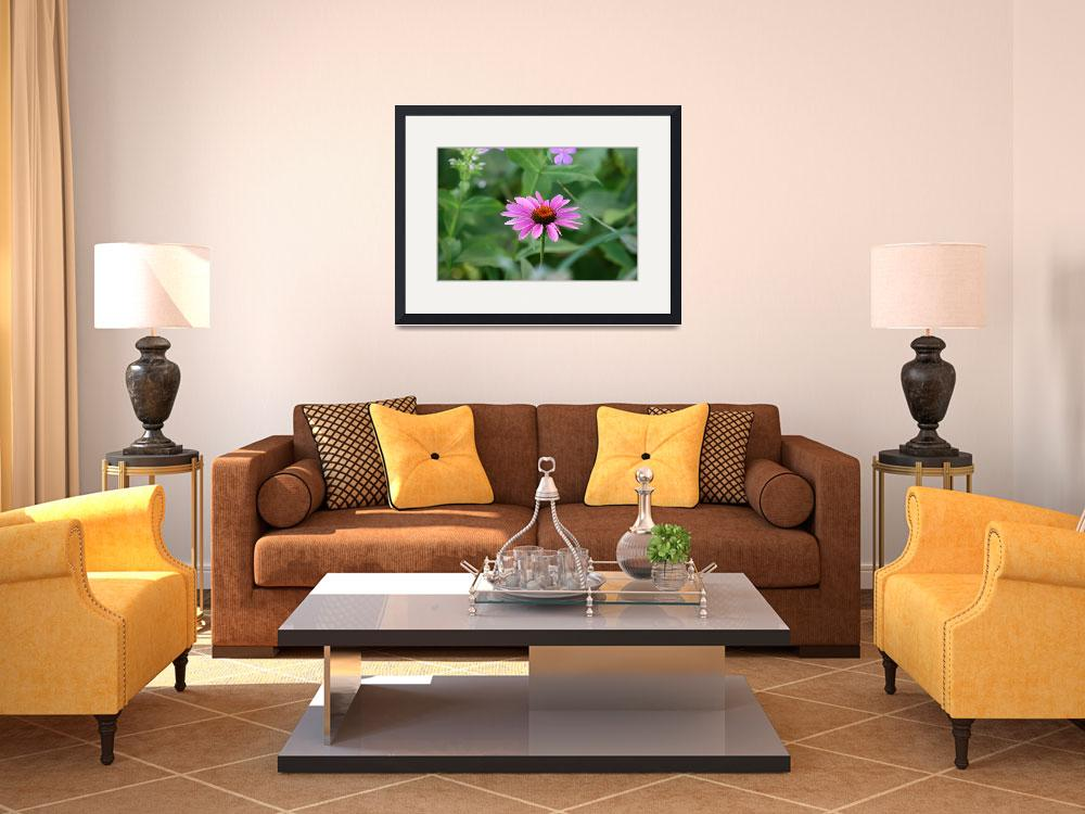 """Purple Coneflower Portrait  Echinecea&quot  (2012) by KsWorldArt"