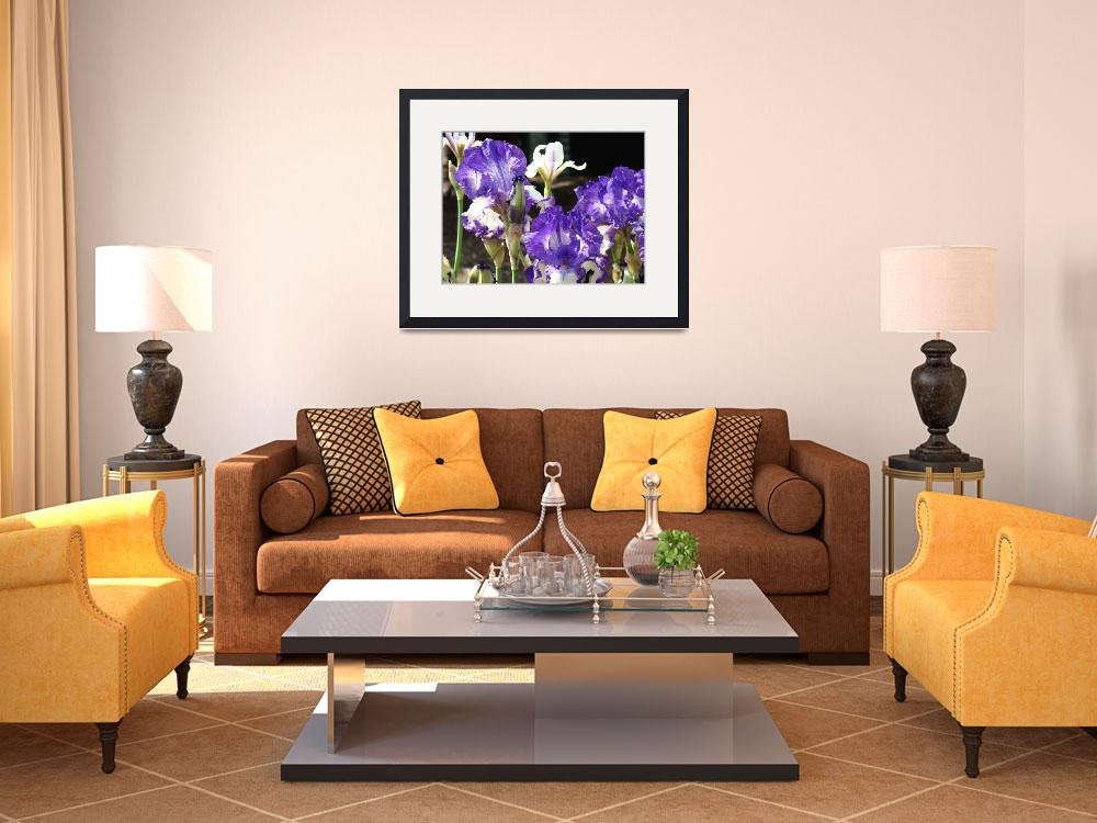 """Irises Art Prints Purple Iris Flowers Garden&quot  (2009) by BasleeTroutman"