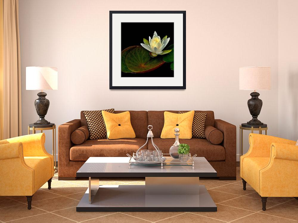 """Water Lily&quot  (2011) by bavosiphotoart"