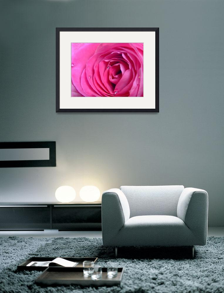 """Rose&quot  (2009) by Hartphotography"