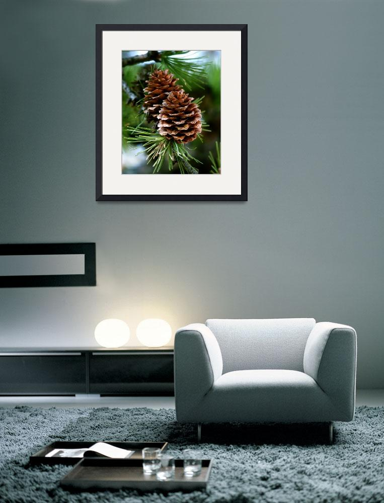 """pine_cones&quot  by DuffyPhoto"