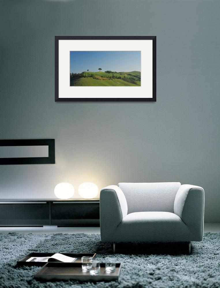 """Low angle view of cypress trees on hills&quot  by Panoramic_Images"