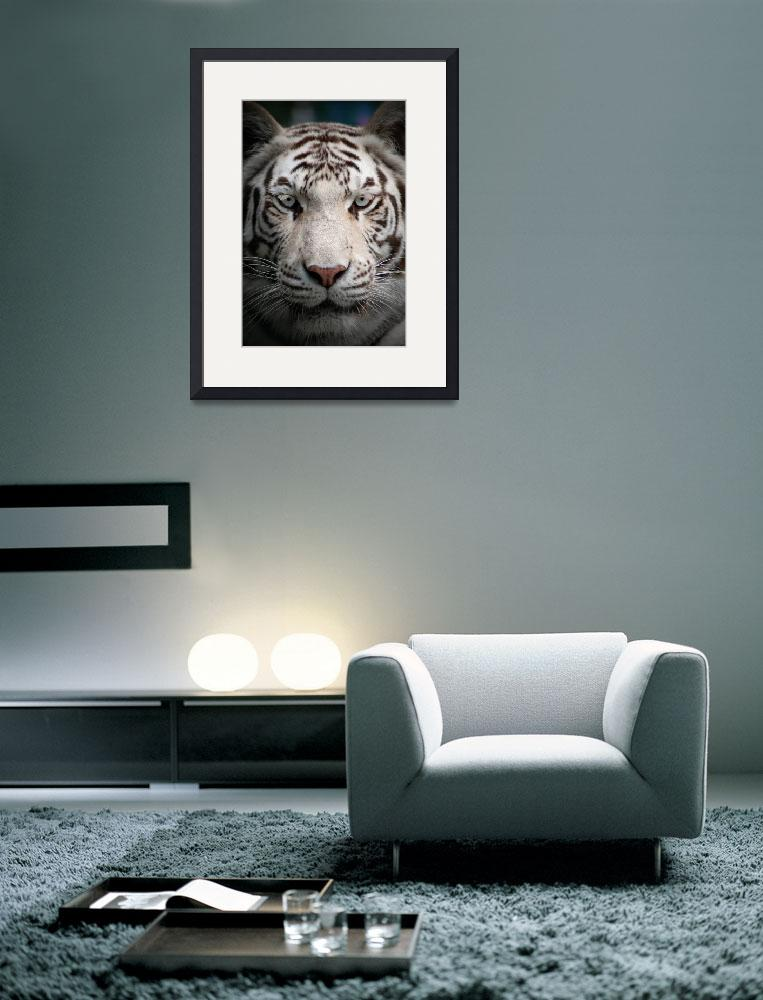 """White Tiger&quot  (2009) by chriswh"