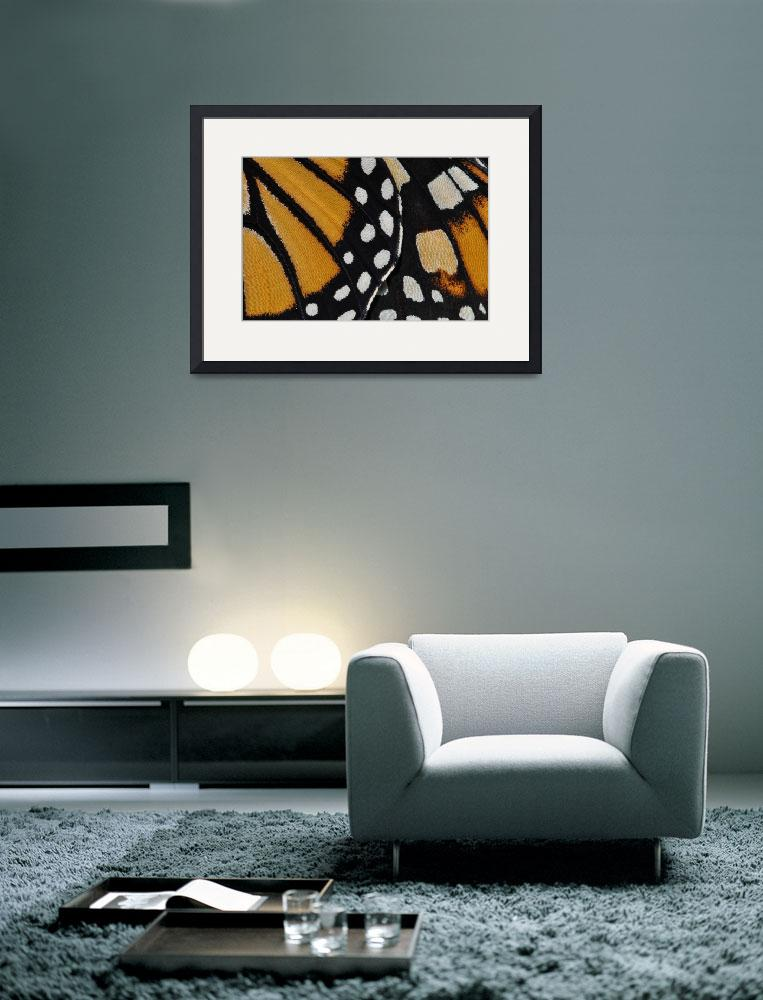"""Monarch Butterfly Wing Abstract No2&quot  (2010) by evansonart"